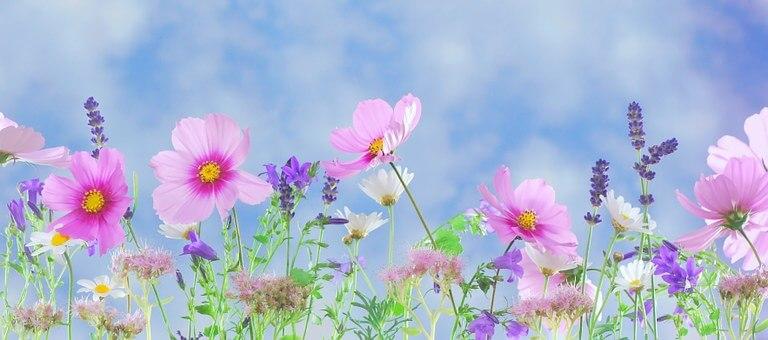 bloeiend verzet groningen