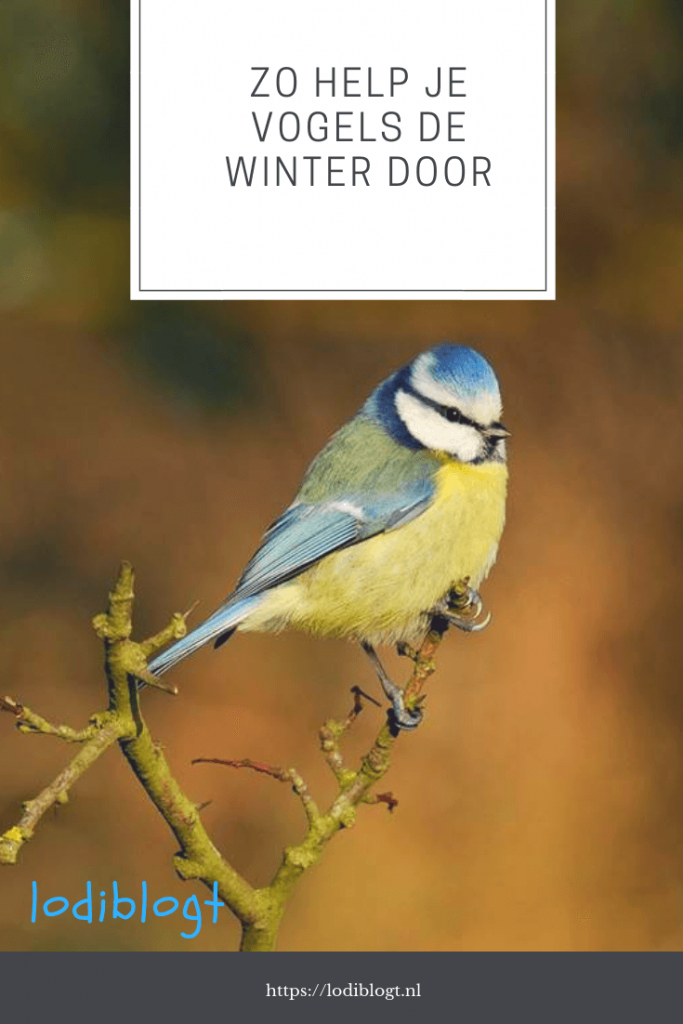 Zo help je vogels de winter door #tips