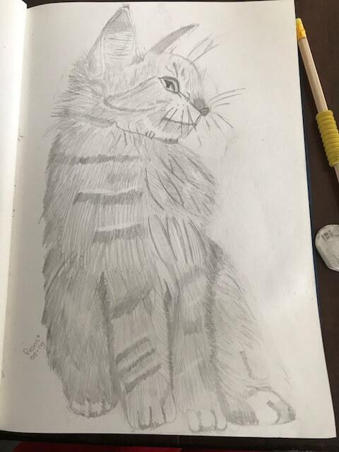 oefenen met katten tekenen