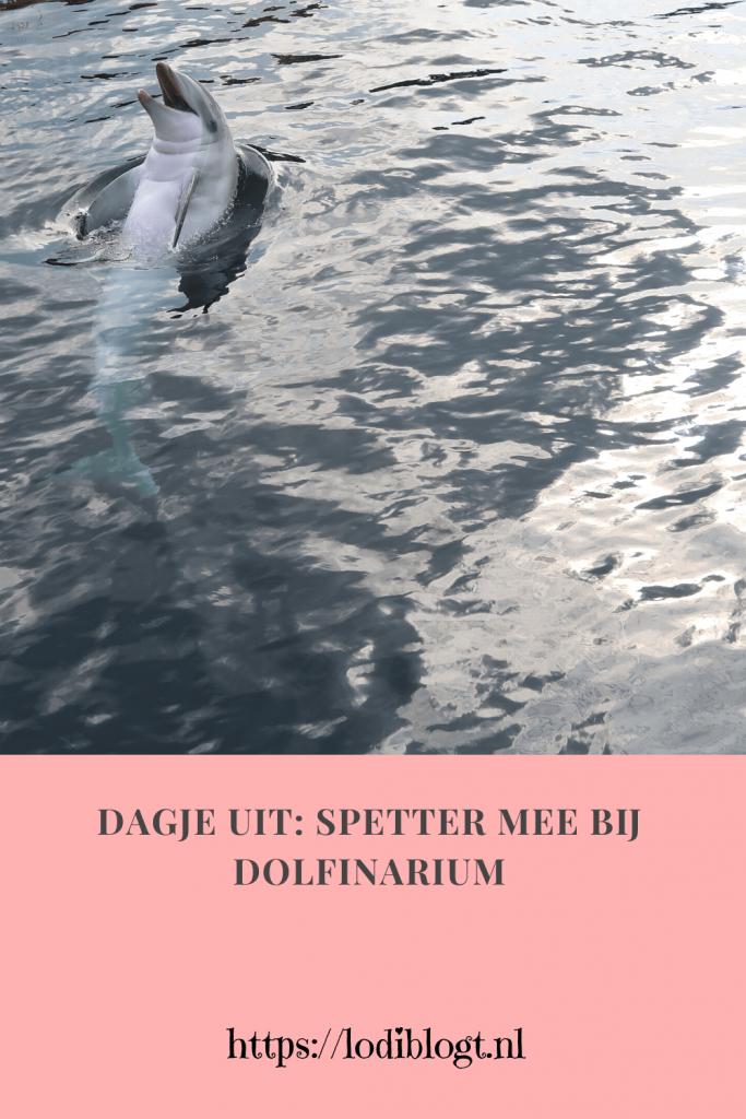 Dagje uit: Spetter mee bij Dolfinarium