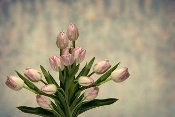 Hier moet je op letten als je online bloemen aanschaft