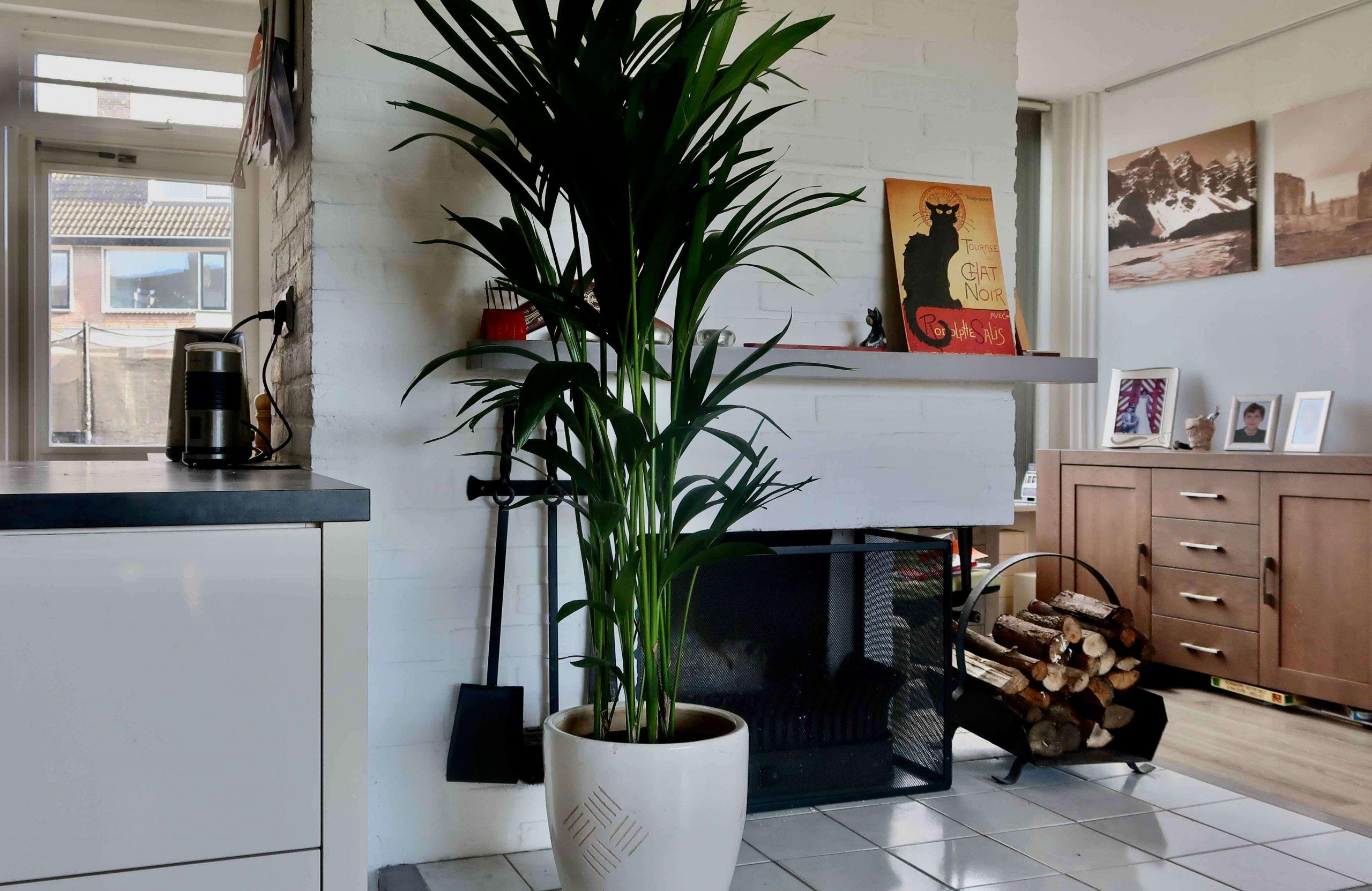 Maak je eigen urban jungle met planten in huis